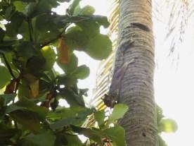 Ein Baumumarmer