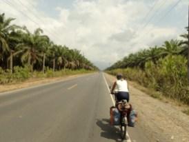Palmölplantagen, wo früher Mangrovenwälder waren