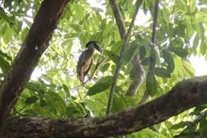 Kennt jemand diesen Vogel?