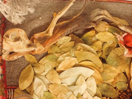 Lama-Embrio und Koka-Blätter