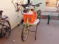 Hund auf Lastenrad
