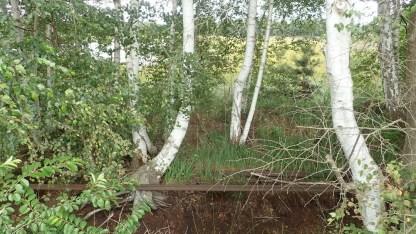 weißes Moor, Spuren