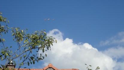 Sehen aus wie Aras- sind Düsenjäger - üben vorrangig Kurven, um keine Grenzen zu überfliegen