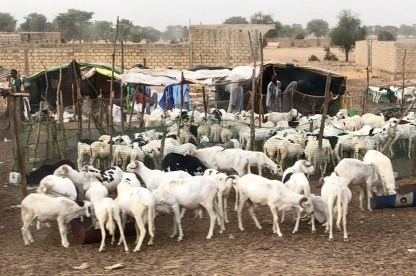 WeltreiseLogbuch-Senegal-Ziegen