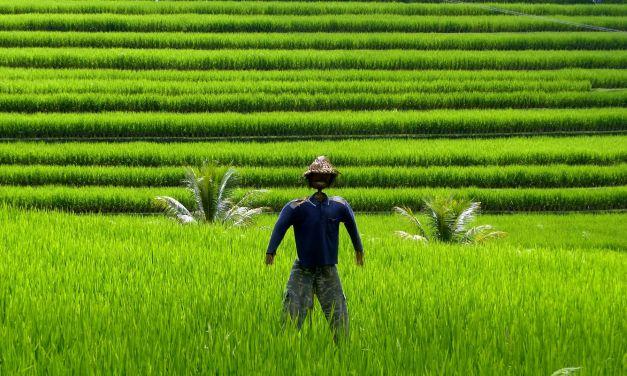 Video aus Indonesien – Bali