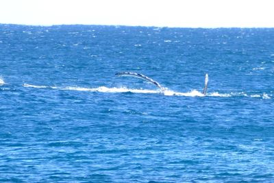 weltreise nocker australien - Gnaraloo Bay - Carnarvon_126