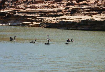 weltreise nocker australien - Kalbarri National Park_269