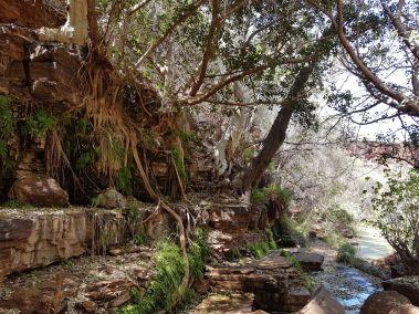 weltreise nocker australien - Karrijini National Park_184