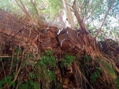 weltreise nocker australien - Karrijini National Park_192