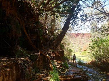 weltreise nocker australien - Karrijini National Park_193