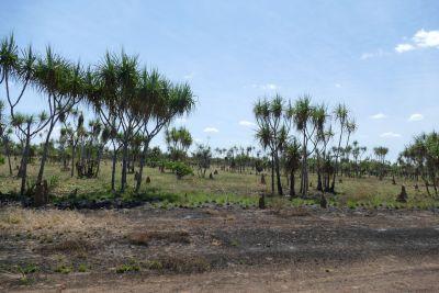 weltreise nocker australien - kakadu national park_352