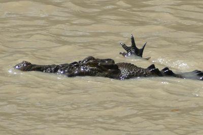 weltreise nocker australien - kakadu national park_484
