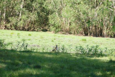 weltreise nocker australien - kakadu national park_619