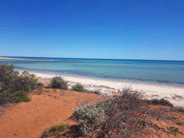 weltreise nocker australien - shark bay_105