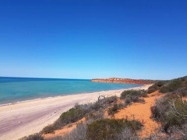weltreise nocker australien - shark bay_129