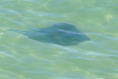 weltreise nocker australien - shark bay_324