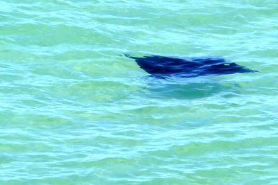weltreise nocker australien - shark bay_325
