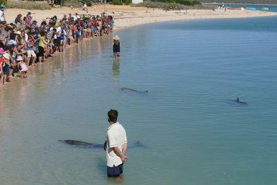 weltreise nocker australien - shark bay_362