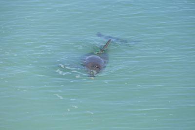 weltreise nocker australien - shark bay_369