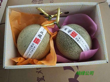 Japanese muskmelons