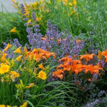 Perennial Flower Border Work Party – Jul. 15 5PM