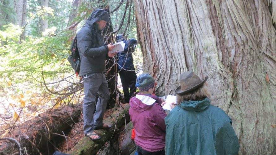 On the other side of the river, Susan's group starts to do a close-up sketch of bark on this massive old-growth Western red cedar (Thuja plicata).