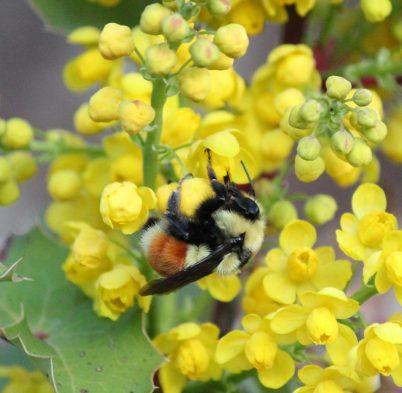 Order Hymenoptera – wasps, bees, ants