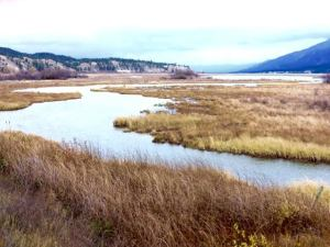 The birthplace of the Columbia River at Canal Flats BC, the south end of Columbia Lake-major wetland area