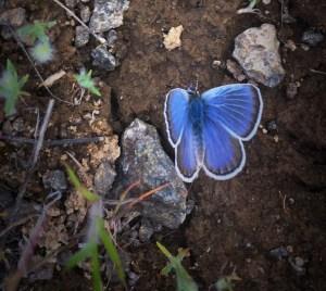 Blue surprise photo: Patrick Farrar
