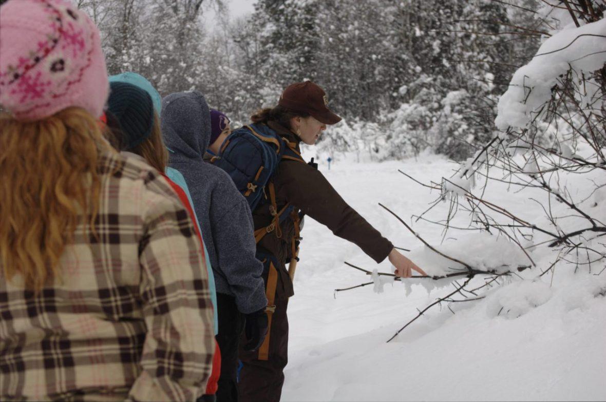Trailside plant observations