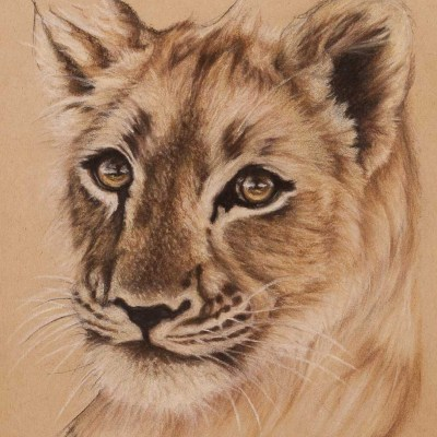 lion cub pastel drawing