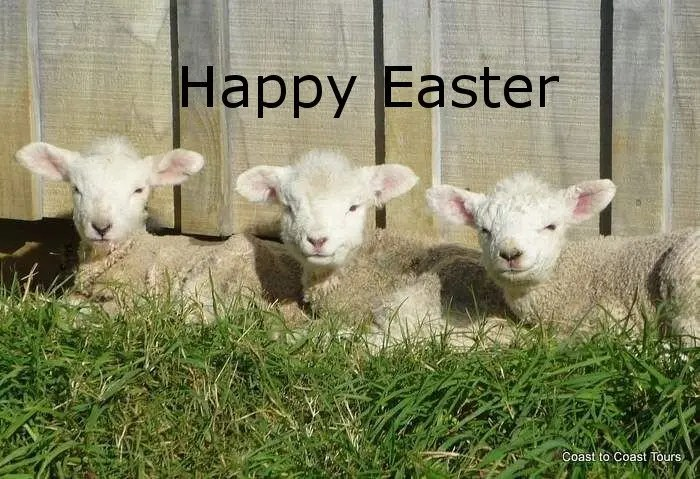 Image result for happy easter with lambs