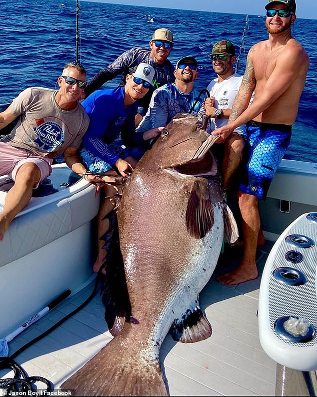 比人高!美漁民捕獲317斤瀕危大魚 年齡或高達50歲(組圖)