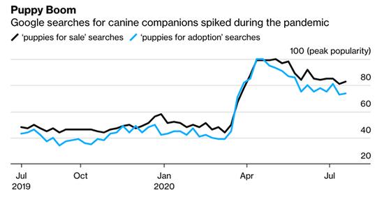 美国疫情经济奇景:任何一只活狗 就至少价值5千美元