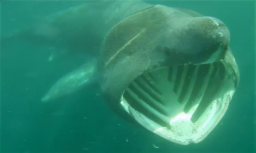 英国被曝面临鲨鱼大规模入侵,背后原因竟是新冠...