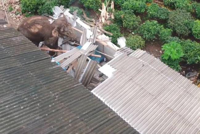 大啖4吨菠萝后大象抵达昆明,村民的回复亮了