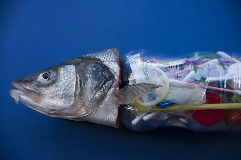 男子三亚清理海洋垃圾20年,曾一天捡700只口罩
