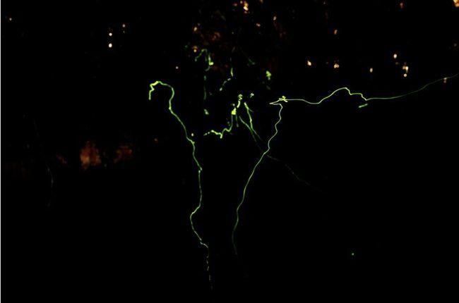 上海140个小区出现貉?还有萤火虫狗獾刺猬…