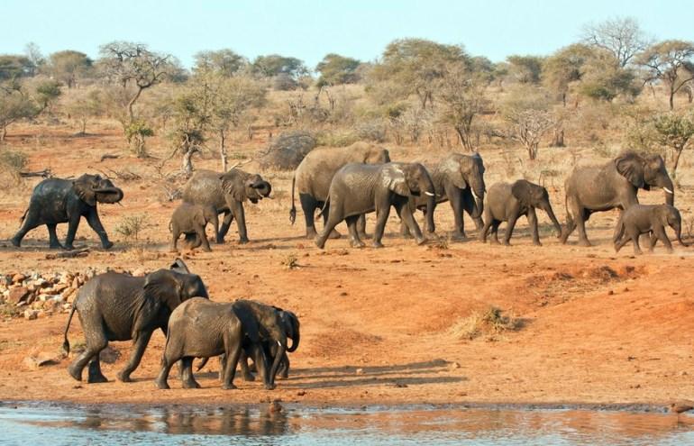 Krugerpark   Must sees in Zuid-Afrika