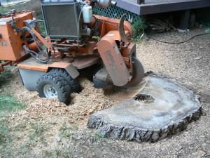 seattle-bellevue-kirkland-redmond-sammamish-stump-removal-054