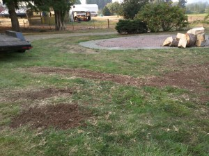 Monroe, WA | tree root removal