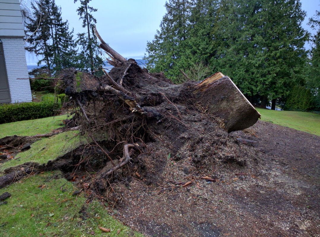 Stump Removal in Everett Washington