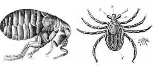 FleaTickMosquitoe