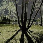 Bäumebaum