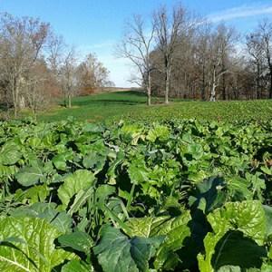 Fall Plot Topper Field