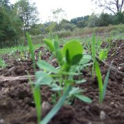 Harvest Salad-1