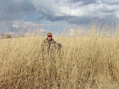 Switchgrass Field