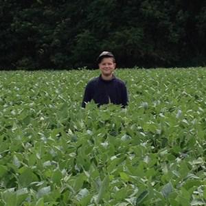 A Healthy Soybean Field