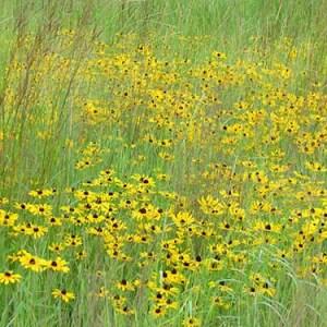 CRP Custom Grass Blends Field