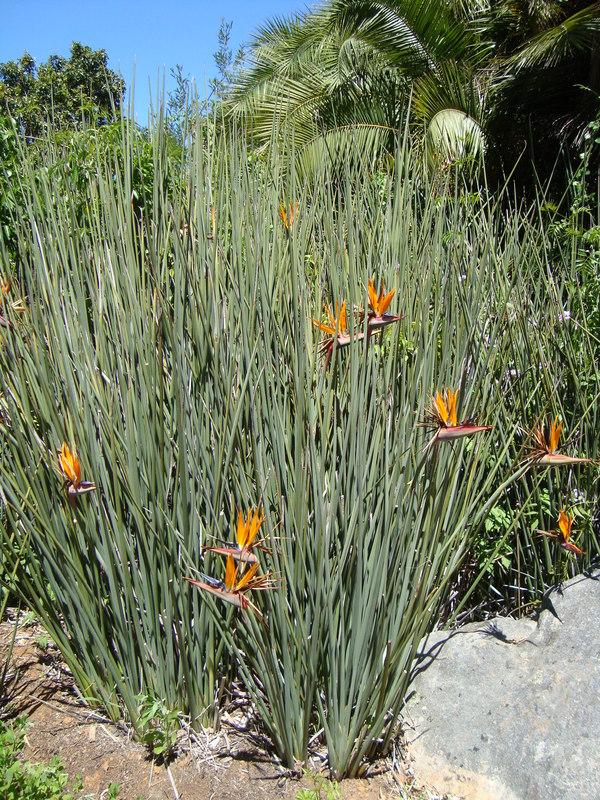 Succulent Plants Cape Town